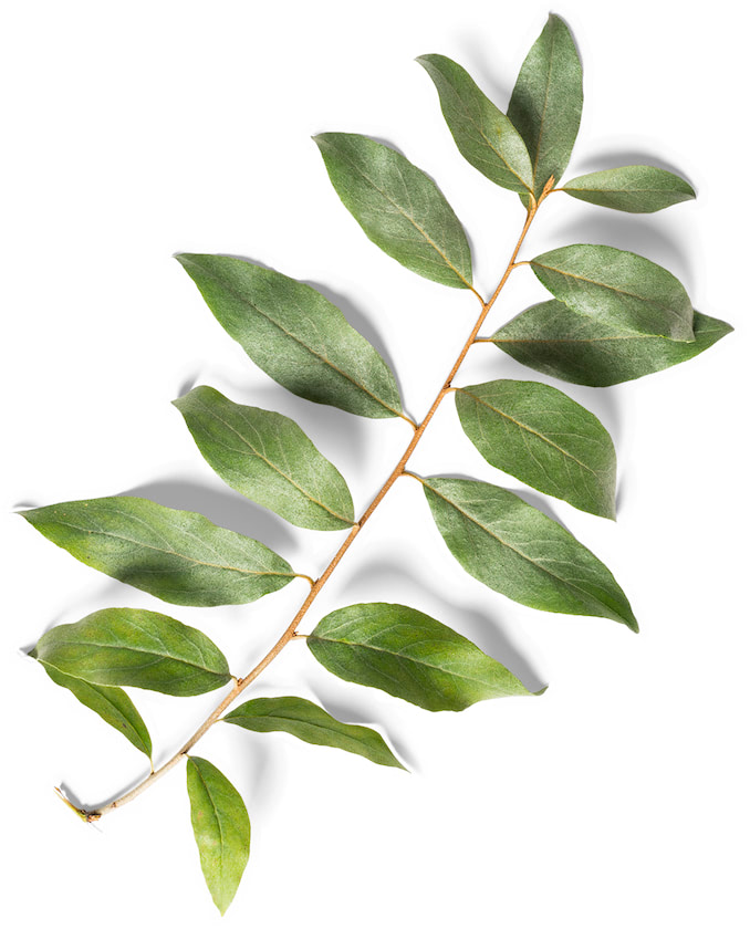 pl-espaces_jardinier_leaves@2x
